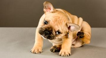 Animales alérgicos necesitan cuidados especiales en la alimentación