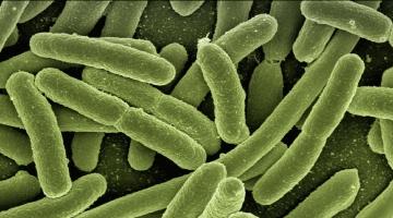 Restrição do uso de antibióticos na produção animal