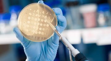 Conheça uma solução com alta eficiência de adsorção de micotoxinas