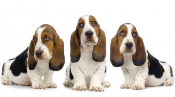 Estresse Animal – Os primeiros dias de vida e a relação com a saúde