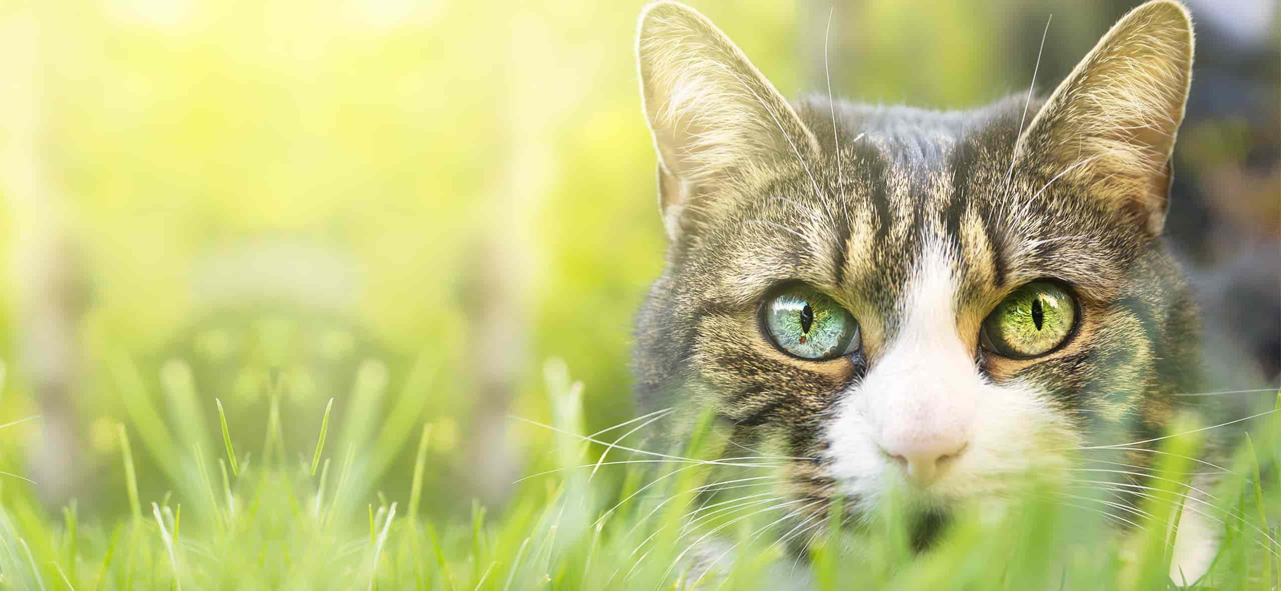 Tutores investem no bem-estar dos felinos