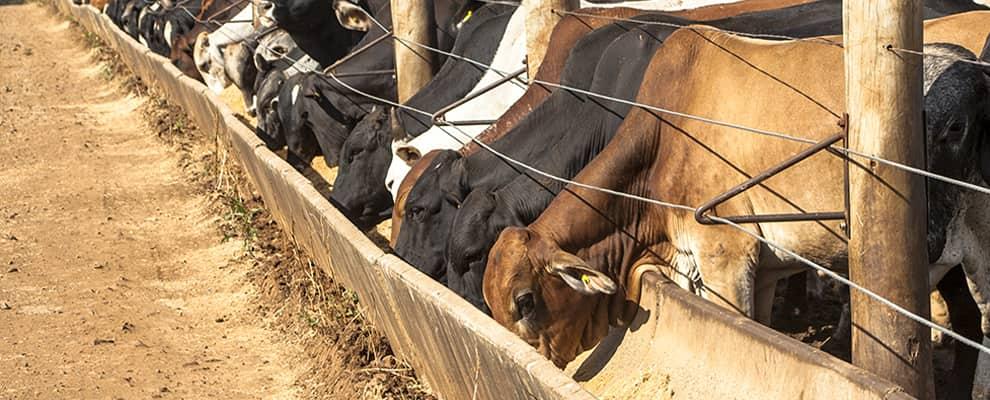 Dicas de como melhorar o desempenho dos bovinos