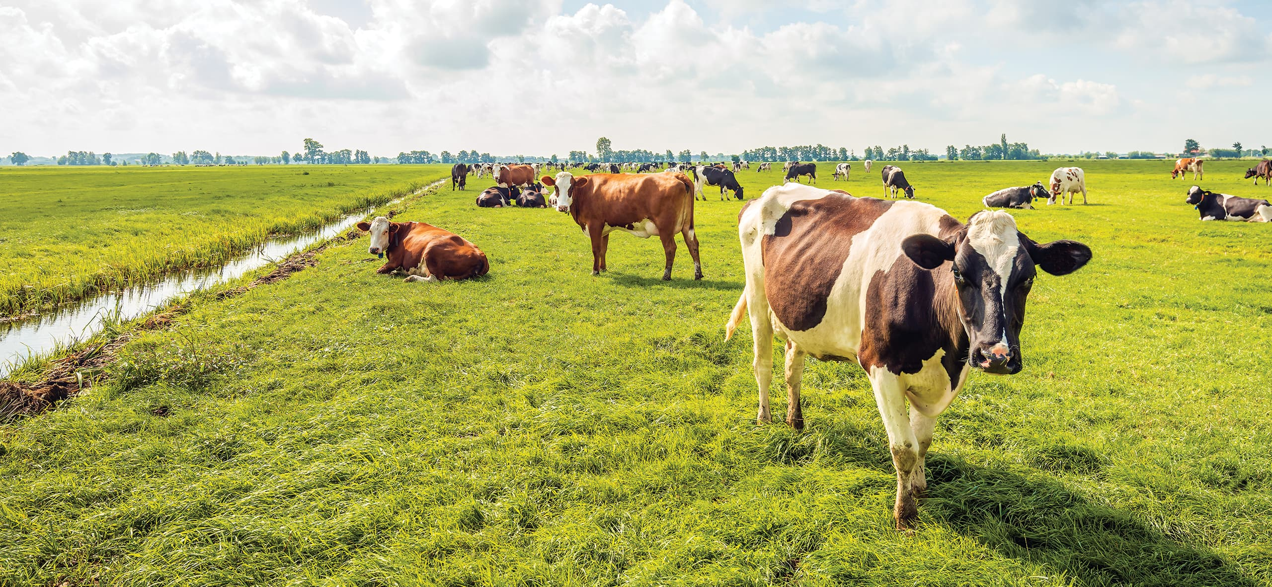 Safe Management Series: attention to animal health in cattle farming