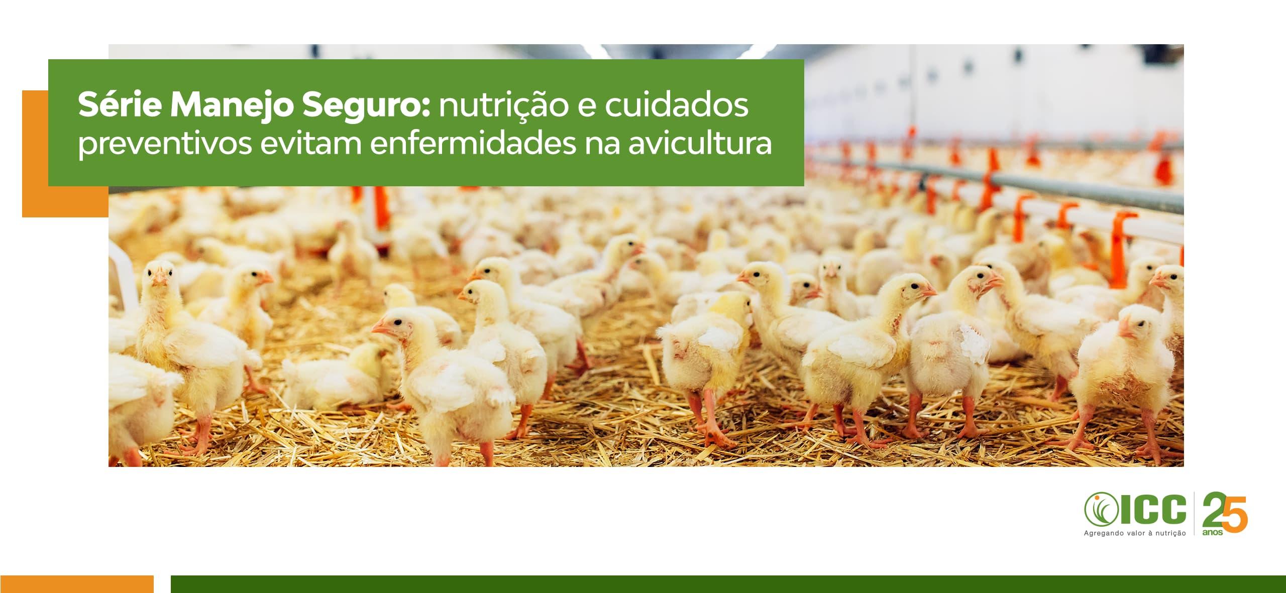 Série Manejo Seguro: nutrição e cuidados preventivos evitam enfermidades na avicultura