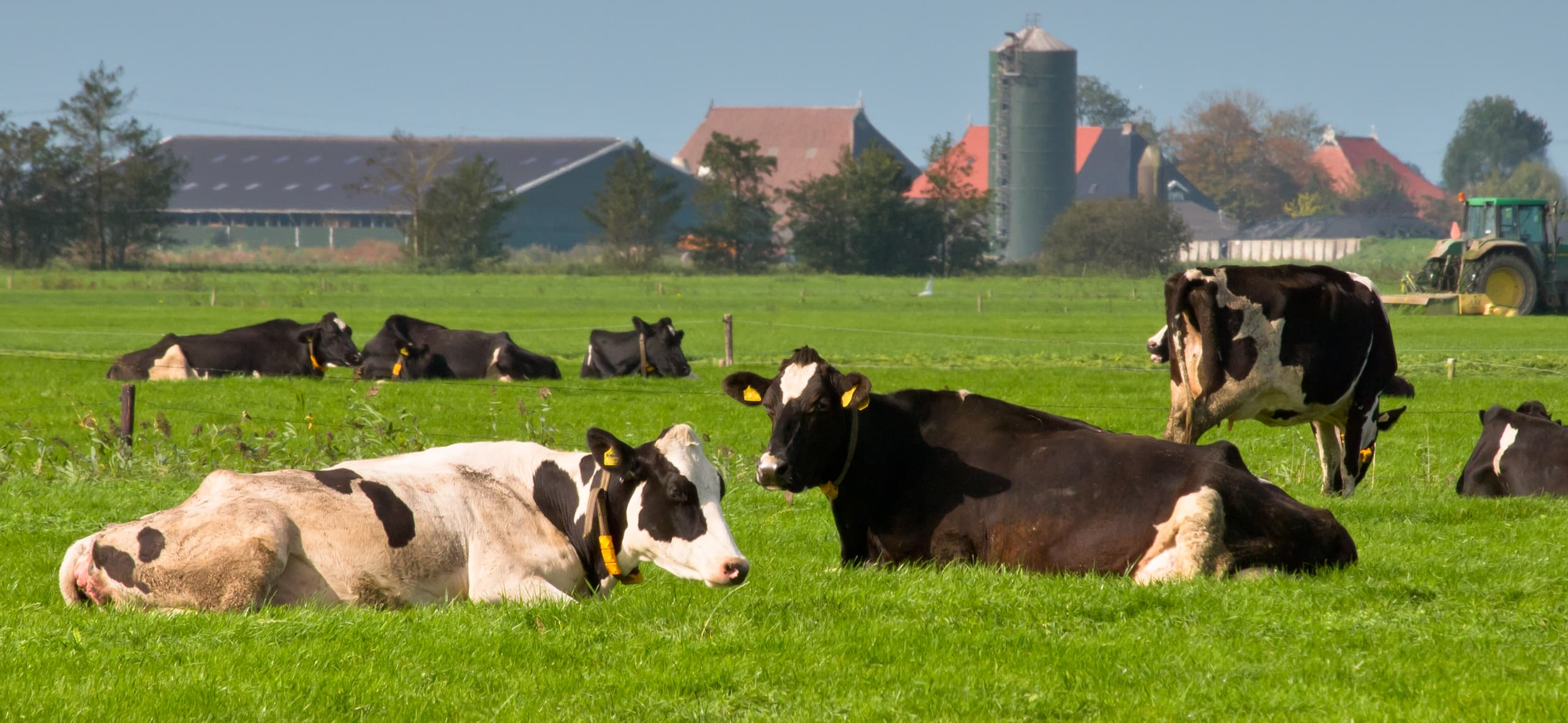 Série Manejo Seguro: planejar e balancear a nutrição faz a diferença na bovinocultura