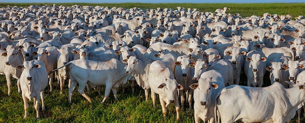 Aumento nas exportações de proteína animal alavancam a venda de aditivos presentes nas rações