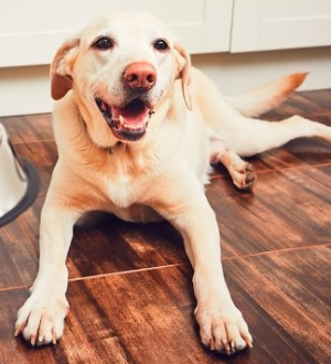 High fiber diet helps to reduce pets' overweight