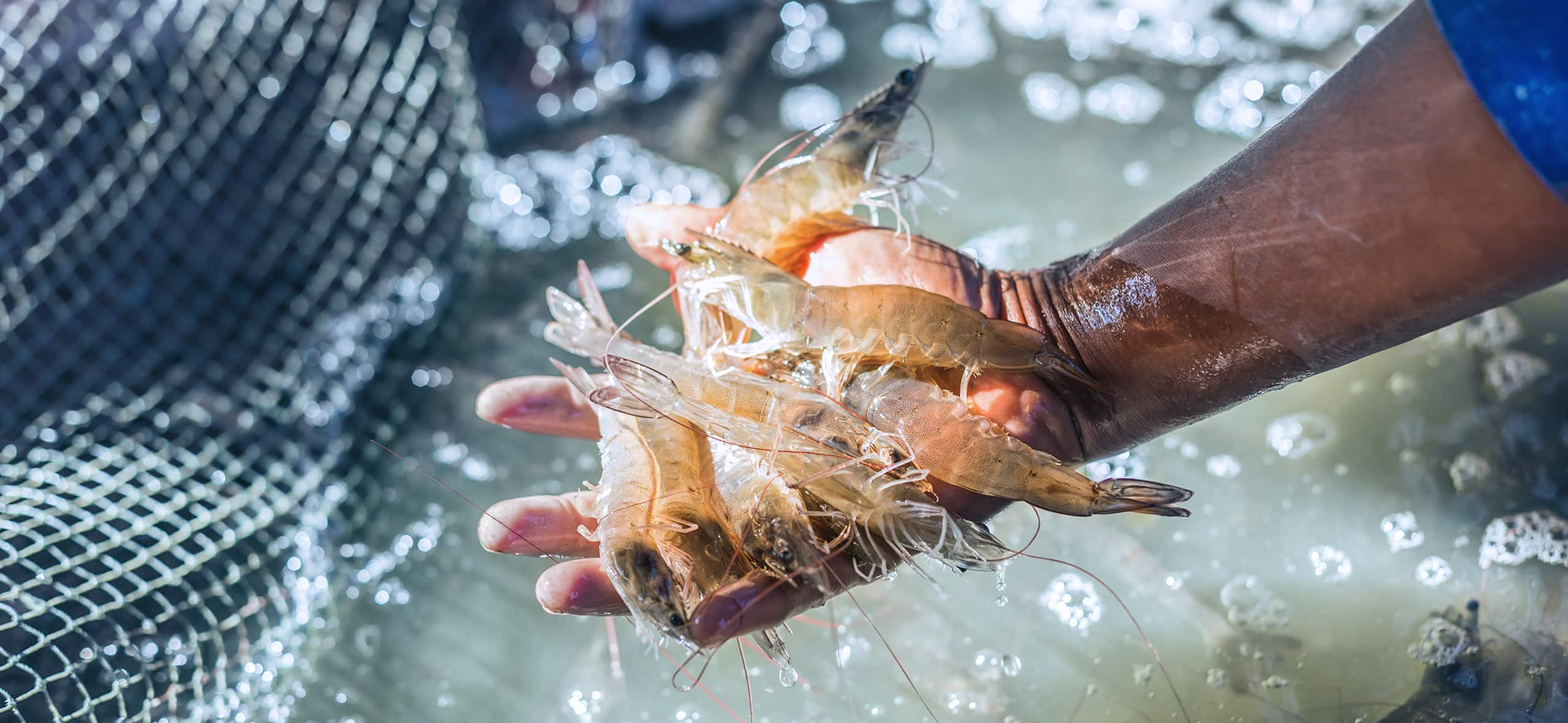 Safe Management Series: learn how to maintain water quality in aquaculture