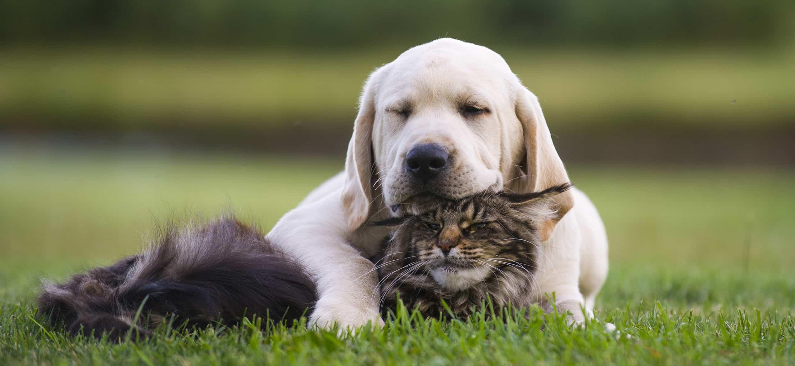 Aditivos a base de levadura y estas como fuente de nutrientes para cada tipo de alimento para mascotas: todo lo que necesita saber al elegir