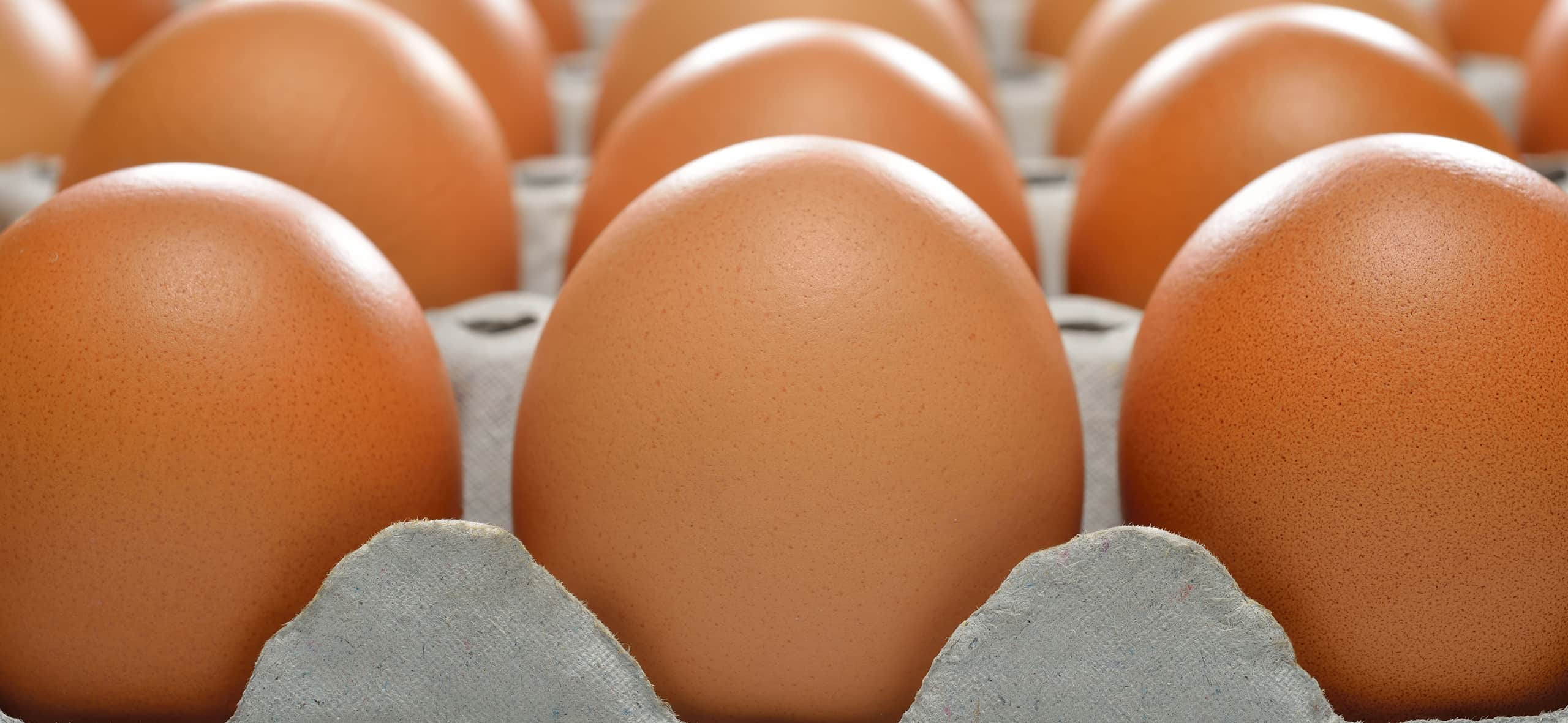 Egg: a little big ally for health and economy