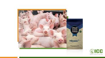 Hilyses®: uma alternativa natural e eficiente para altos custos de ingredientes na produção de suínos